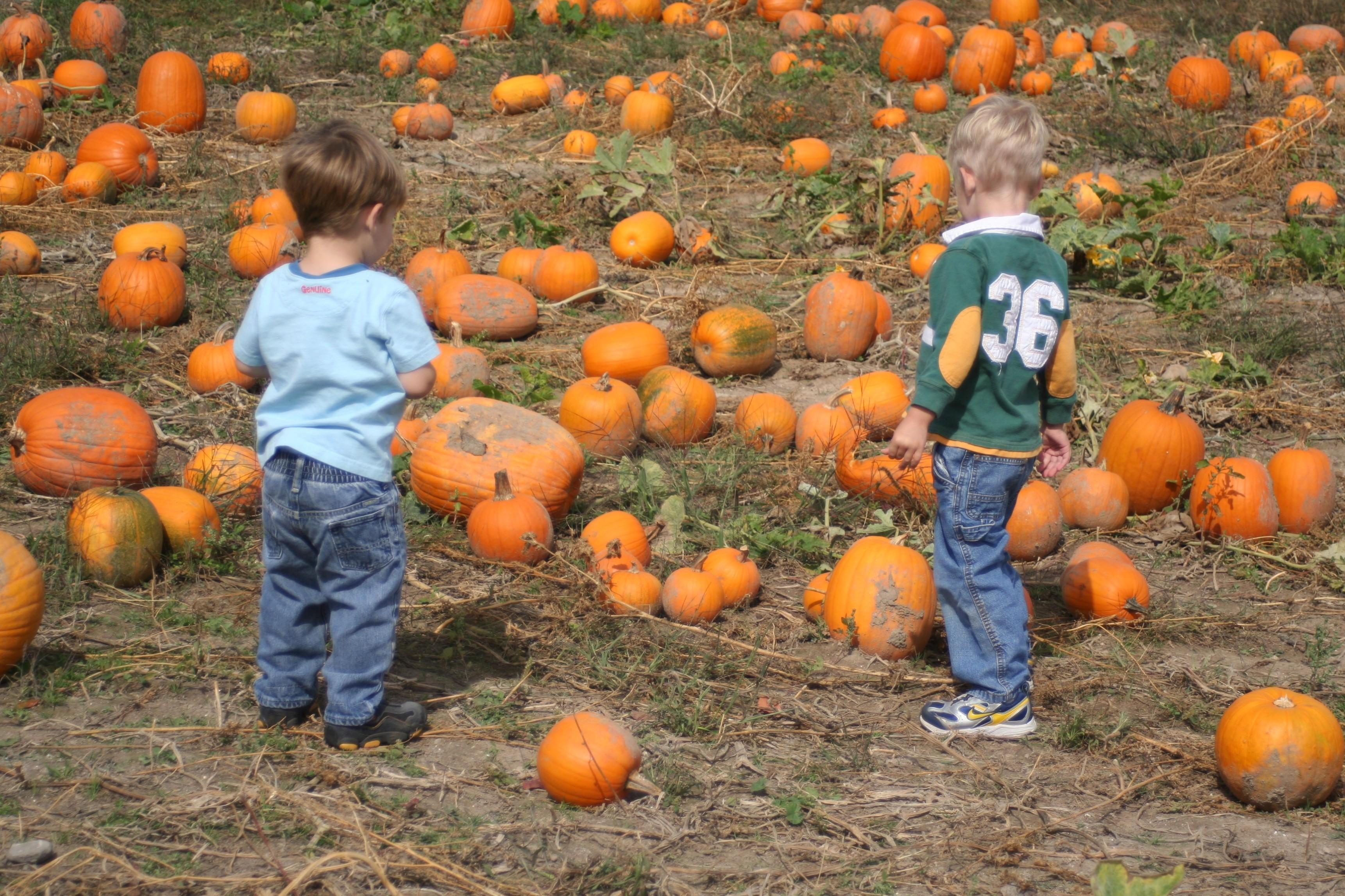 boys in pumpkinpatch